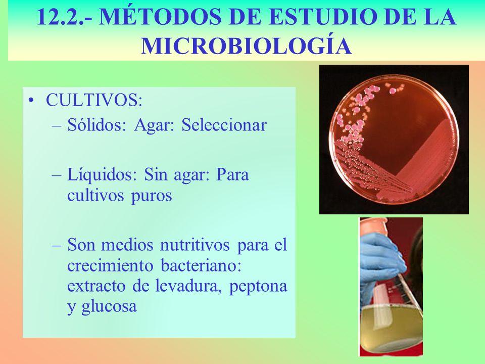 CULTIVOS: –Sólidos: Agar: Seleccionar –Líquidos: Sin agar: Para cultivos puros –Son medios nutritivos para el crecimiento bacteriano: extracto de leva
