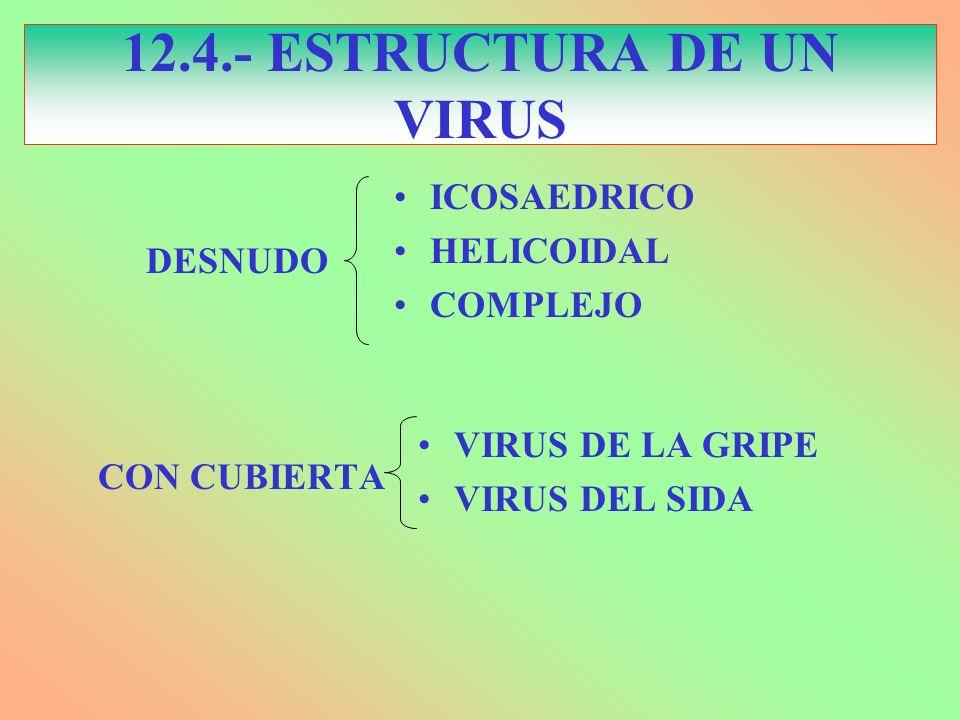 12.4.- ESTRUCTURA DE UN VIRUS ICOSAEDRICO HELICOIDAL COMPLEJO CON CUBIERTA VIRUS DE LA GRIPE VIRUS DEL SIDA DESNUDO