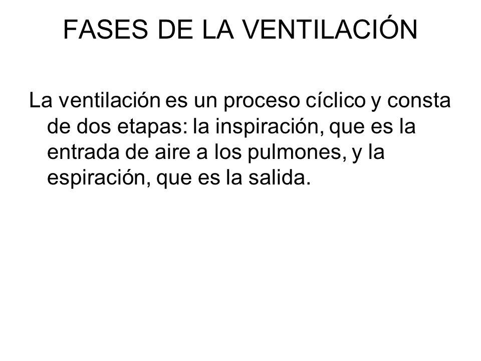FASES DE LA VENTILACIÓN La ventilación es un proceso cíclico y consta de dos etapas: la inspiración, que es la entrada de aire a los pulmones, y la es