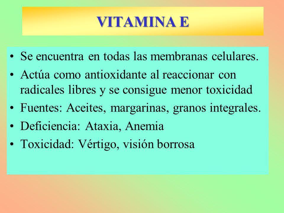 VITAMINA E Se encuentra en todas las membranas celulares. Actúa como antioxidante al reaccionar con radicales libres y se consigue menor toxicidad Fue