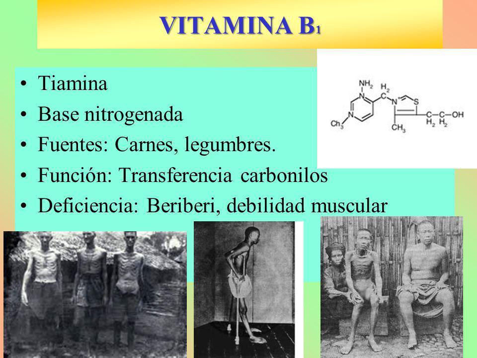 VITAMINA B 1 Tiamina Base nitrogenada Fuentes: Carnes, legumbres. Función: Transferencia carbonilos Deficiencia: Beriberi, debilidad muscular
