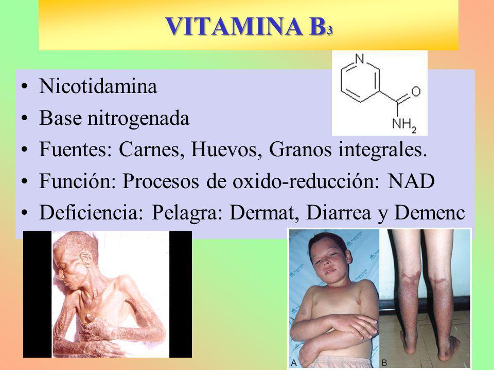 VITAMINA B 3 Nicotidamina Base nitrogenada Fuentes: Carnes, Huevos, Granos integrales. Función: Procesos de oxido-reducción: NAD Deficiencia: Pelagra:
