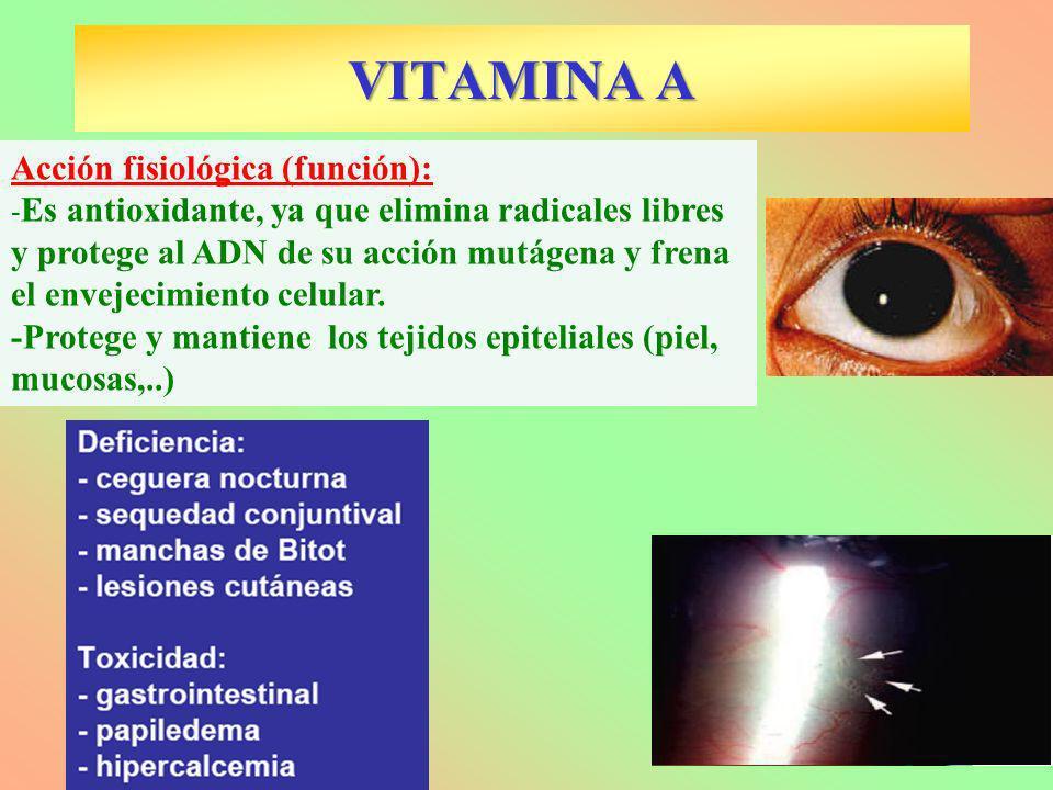 Acción fisiológica (función): - Es antioxidante, ya que elimina radicales libres y protege al ADN de su acción mutágena y frena el envejecimiento celu