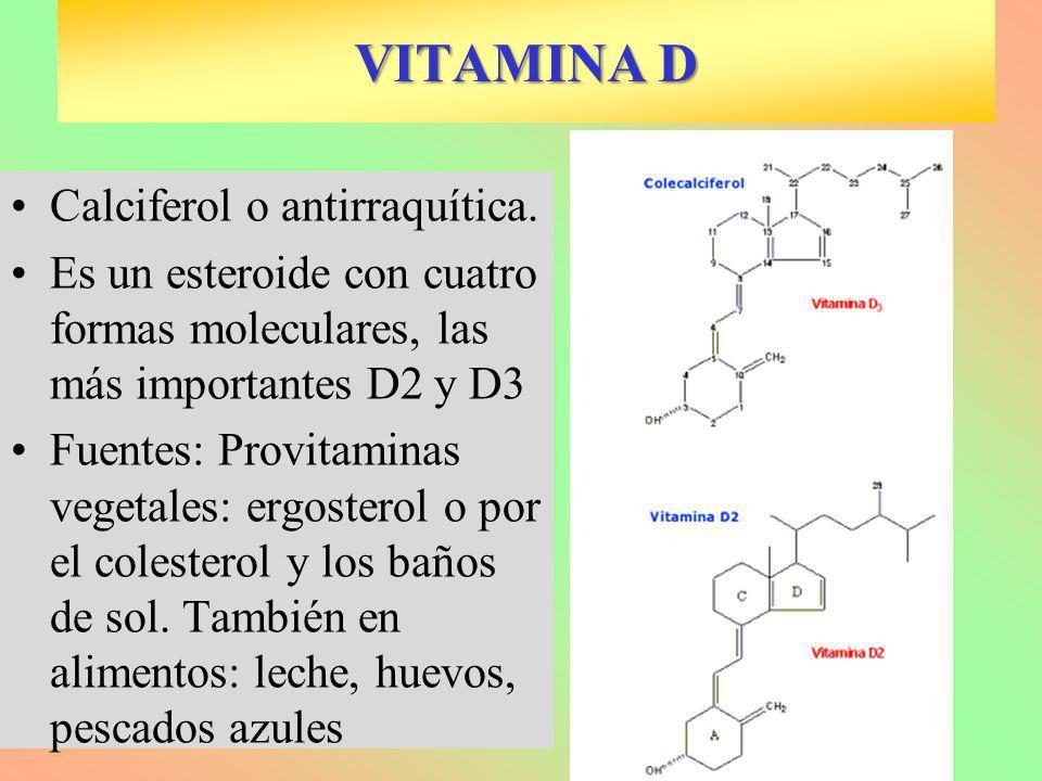 VITAMINA D Calciferol o antirraquítica. Es un esteroide con cuatro formas moleculares, las más importantes D2 y D3 Fuentes: Provitaminas vegetales: er