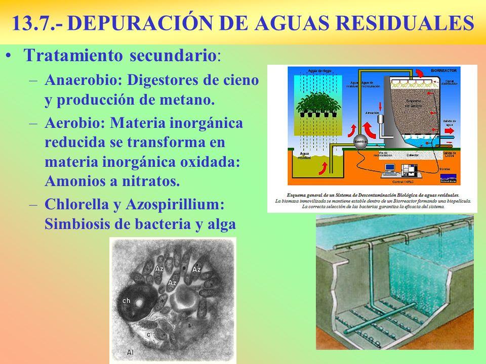 13.7.- DEPURACIÓN DE AGUAS RESIDUALES Tratamiento secundario: –Anaerobio: Digestores de cieno y producción de metano. –Aerobio: Materia inorgánica red