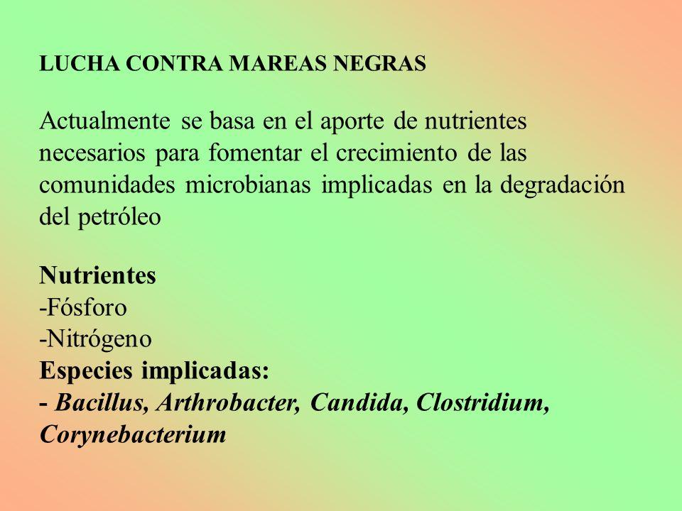 LUCHA CONTRA MAREAS NEGRAS Actualmente se basa en el aporte de nutrientes necesarios para fomentar el crecimiento de las comunidades microbianas impli