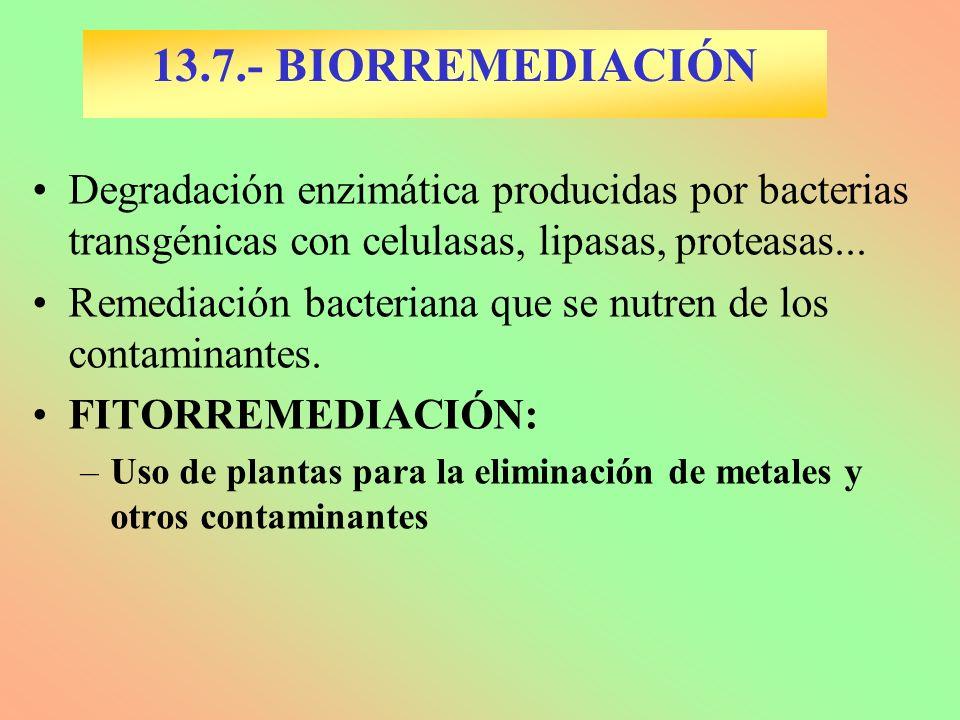 13.7.- BIORREMEDIACIÓN Degradación enzimática producidas por bacterias transgénicas con celulasas, lipasas, proteasas... Remediación bacteriana que se