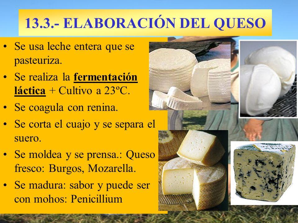13.3.- ELABORACIÓN DEL QUESO Se usa leche entera que se pasteuriza. Se realiza la fermentación láctica + Cultivo a 23ºC. Se coagula con renina. Se cor