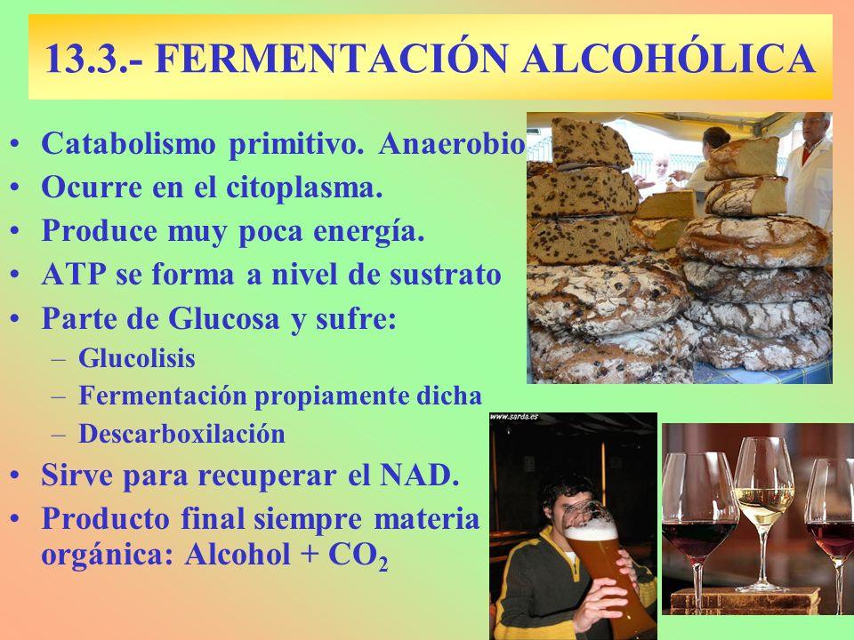 13.3.- FERMENTACIÓN ALCOHÓLICA Catabolismo primitivo. Anaerobio Ocurre en el citoplasma. Produce muy poca energía. ATP se forma a nivel de sustrato Pa