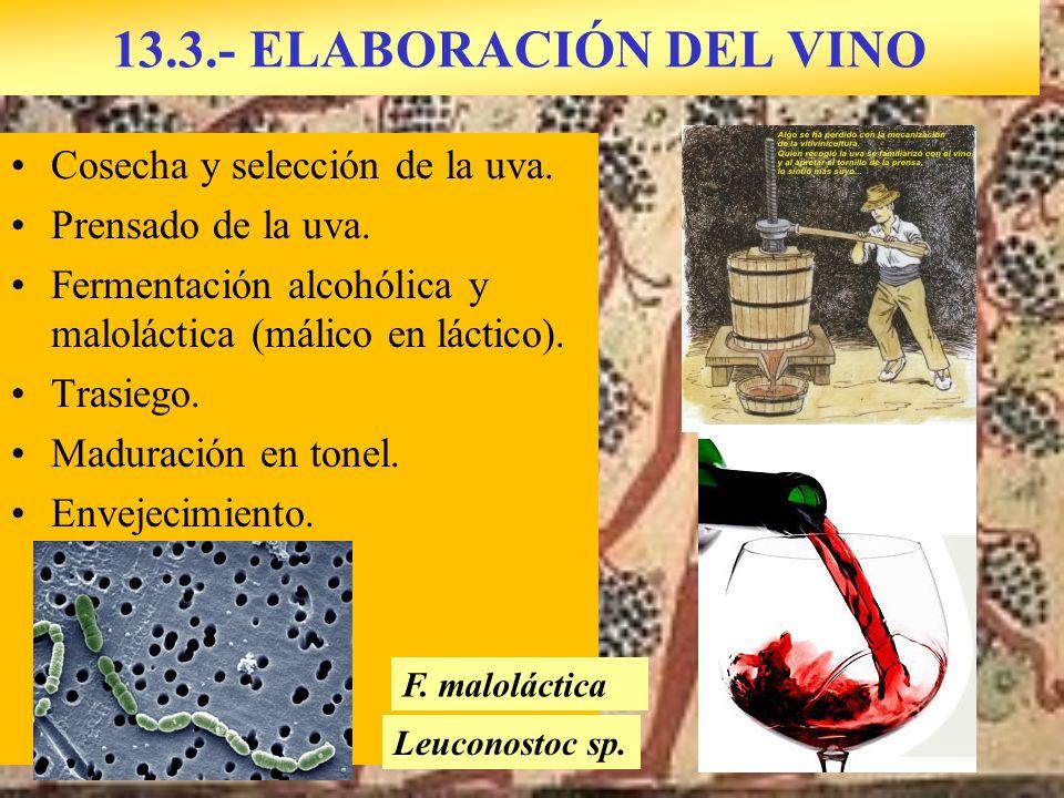 13.3.- ELABORACIÓN DEL VINO Cosecha y selección de la uva. Prensado de la uva. Fermentación alcohólica y maloláctica (málico en láctico). Trasiego. Ma