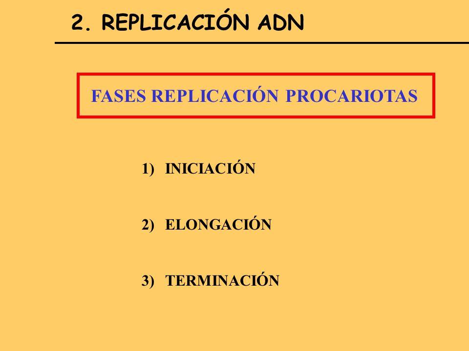 2. REPLICACIÓN ADN FASES REPLICACIÓN PROCARIOTAS 1)INICIACIÓN 2)ELONGACIÓN 3)TERMINACIÓN