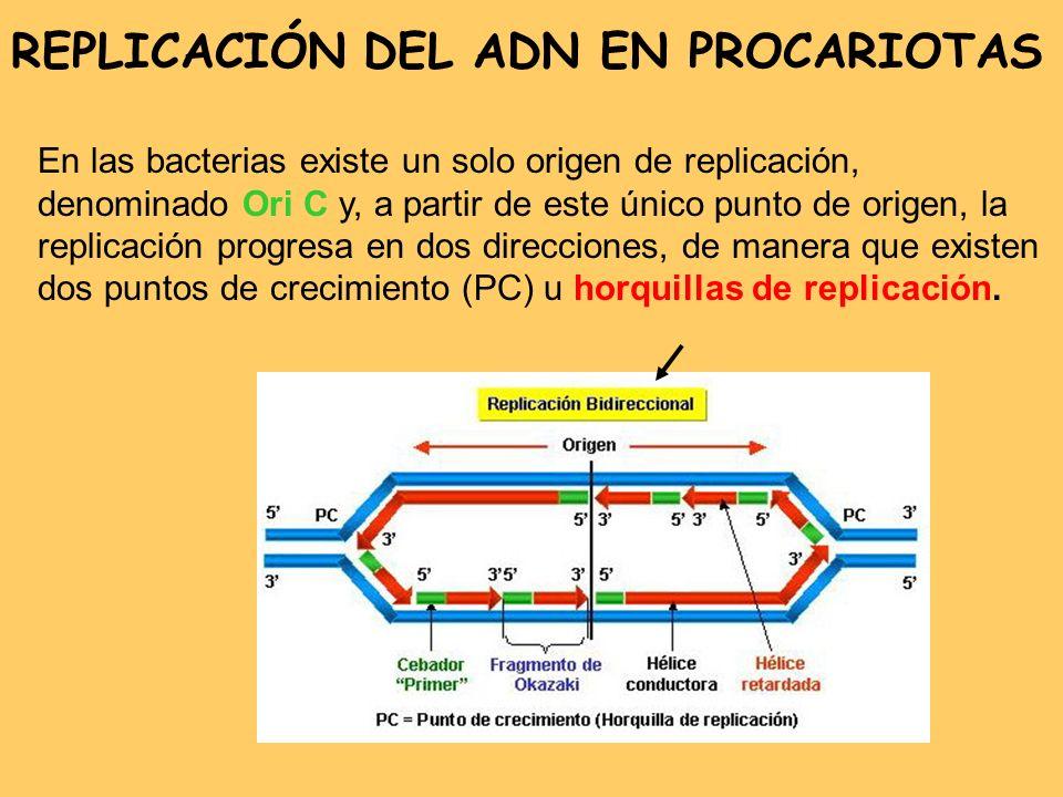 REPLICACIÓN ADN EN PROCARIOTAS 1)INICIACIÓN - Reconocimiento del sitio de inicio de la replicación.
