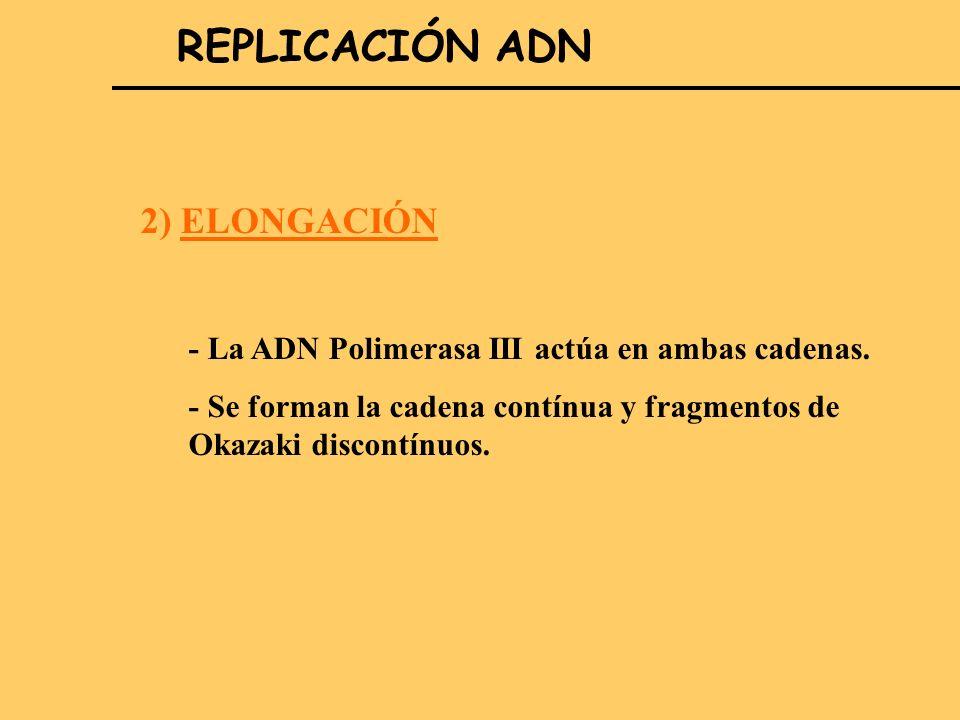 2. REPLICACIÓN ADN