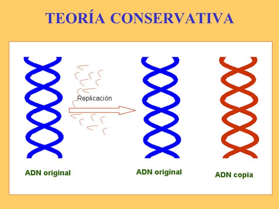 TEORÍA DISPERSIVA ADN copia