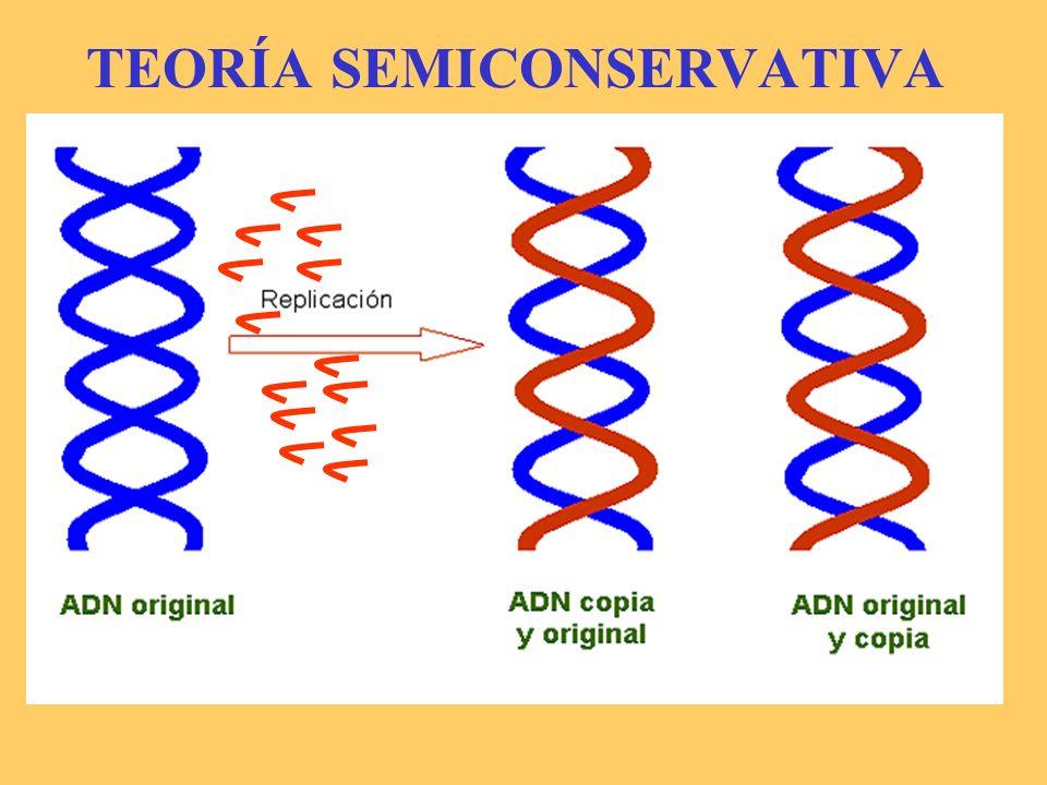 -La replicación es un proceso previo a la división celular.