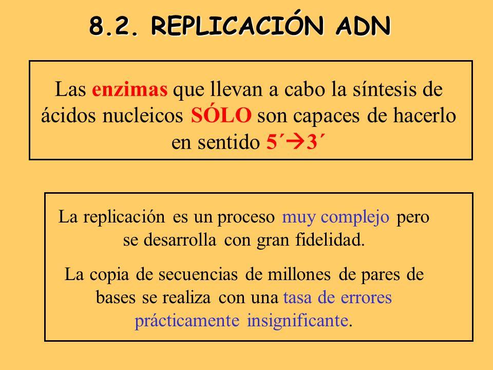 8.2.- REPLICACIÓN DEL ADN COMPONENTES NECESARIOS: DESOXIRRIBONUCLEOTIDOS TRIFOSFORILADOS: dATP, dGTP, dCTP y dTTP (millones) PROTEÍNAS: Proteínas de iniciación y fijación SSBP (Single Strand Binding Protein = Fijación a la cadena) ENZIMAS: HELICASA: Rompe puentes de hidrógeno TOPOISOMERASA: Elimina tensiones y superenrrollamientos RNA POLIMERASA: Síntesis de Cebador: ARN (10-30) DNA POLIMERASA III : LA REINA REPLICA: Conductora DNA POLIMERASA I: Reparadora y sustituye al cebador LIGASA: Une los fragmentos de Okazaki de la retrasada (2.000)