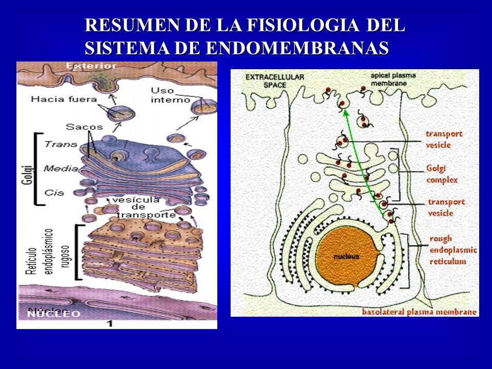 RESUMEN DE LA FISIOLOGIA DEL SISTEMA DE ENDOMEMBRANAS