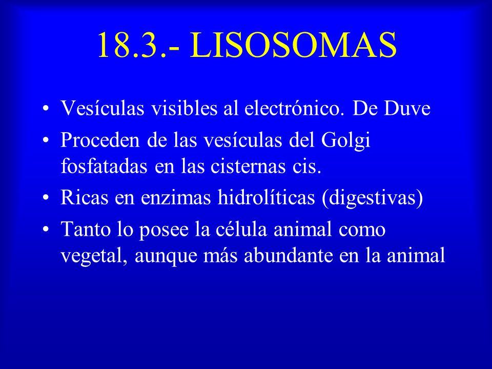 18.3.- LISOSOMAS Vesículas visibles al electrónico. De Duve Proceden de las vesículas del Golgi fosfatadas en las cisternas cis. Ricas en enzimas hidr