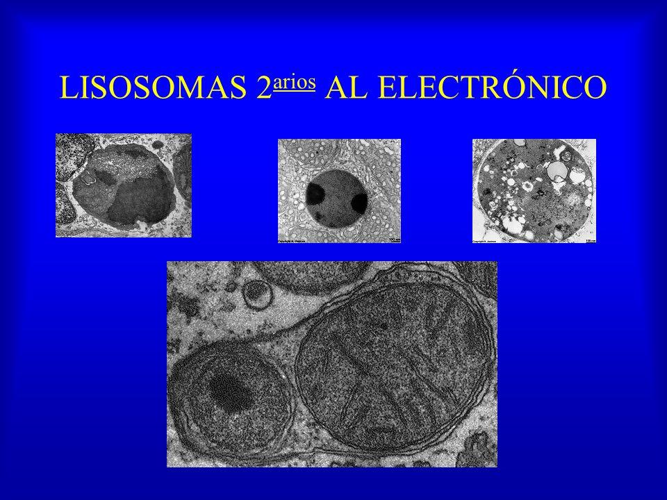 LISOSOMAS 2 arios AL ELECTRÓNICO