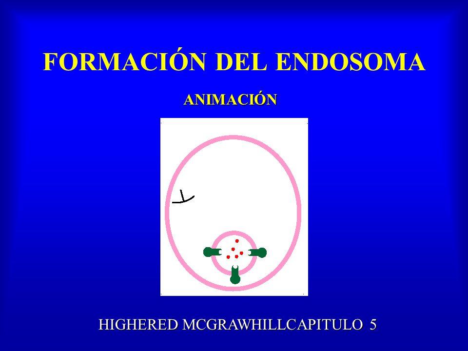 FORMACIÓN DEL ENDOSOMA ANIMACIÓN HIGHERED MCGRAWHILLCAPITULO 5