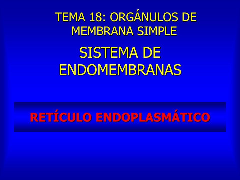 RETÍCULO ENDOPLASMÁTICO SISTEMA DE ENDOMEMBRANAS TEMA 18: ORGÁNULOS DE MEMBRANA SIMPLE TEMA 18: ORGÁNULOS DE MEMBRANA SIMPLE
