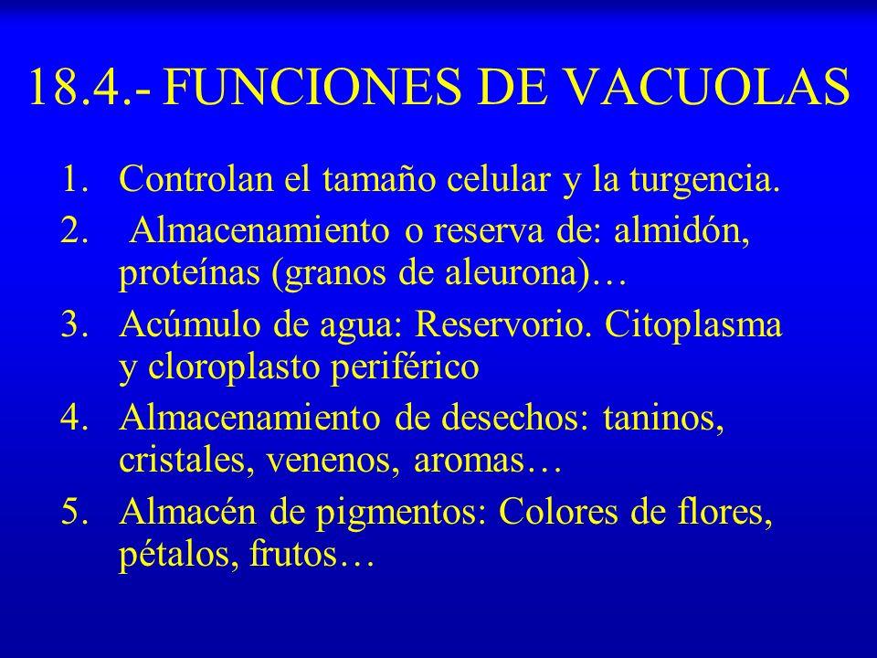 18.4.- FUNCIONES DE VACUOLAS 1.Controlan el tamaño celular y la turgencia. 2. Almacenamiento o reserva de: almidón, proteínas (granos de aleurona)… 3.