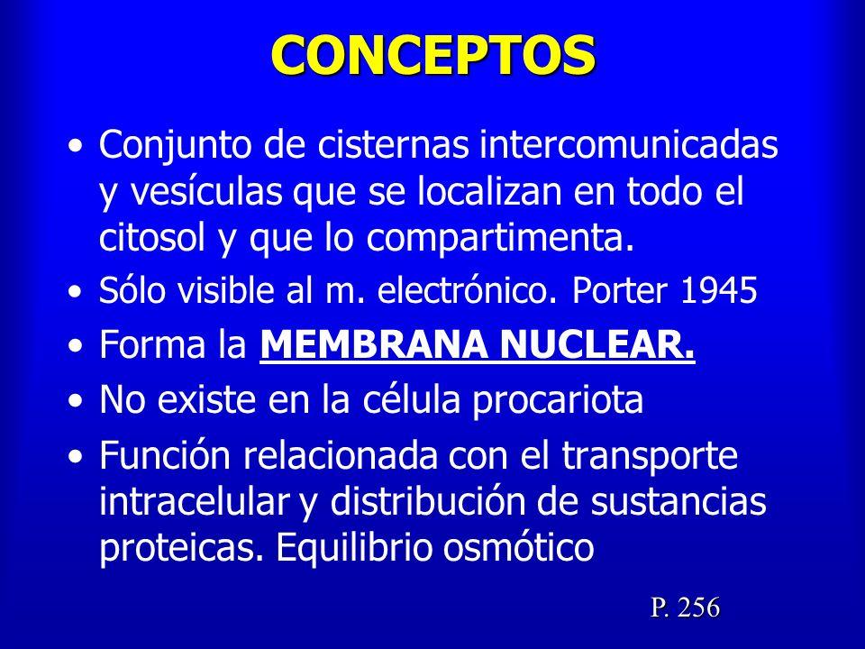 18.4.- PEROXISOMAS AL ELECTRÓNICO