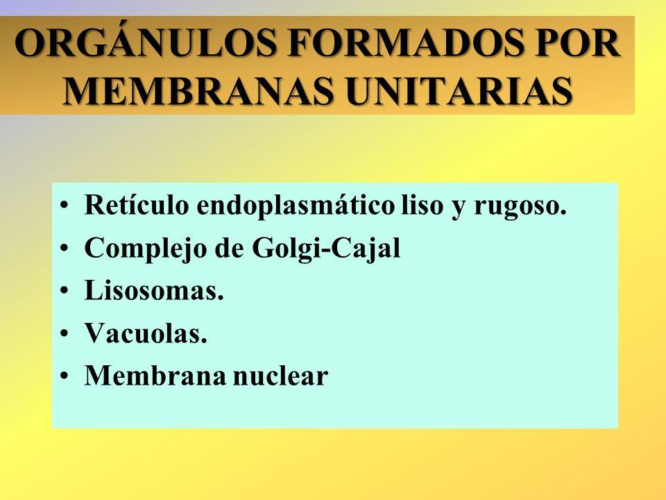 ORGÁNULOS FORMADOS POR MEMBRANAS UNITARIAS Retículo endoplasmático liso y rugoso. Complejo de Golgi-Cajal Lisosomas. Vacuolas. Membrana nuclear