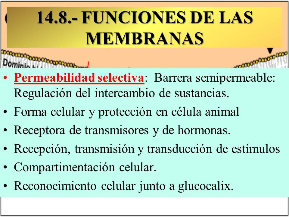 14.8.- FUNCIONES DE LAS MEMBRANAS D.N.I. Molecular Permeabilidad selectiva: Barrera semipermeable: Regulación del intercambio de sustancias. Forma cel