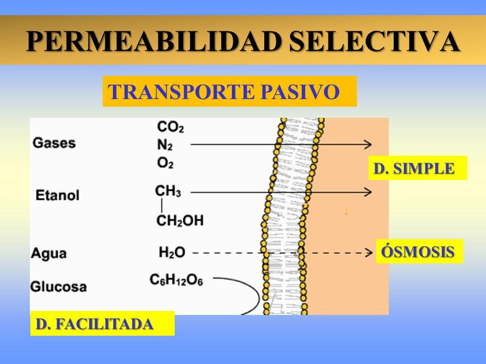 PERMEABILIDAD SELECTIVA D. SIMPLE ÓSMOSIS D. FACILITADA TRANSPORTE PASIVO