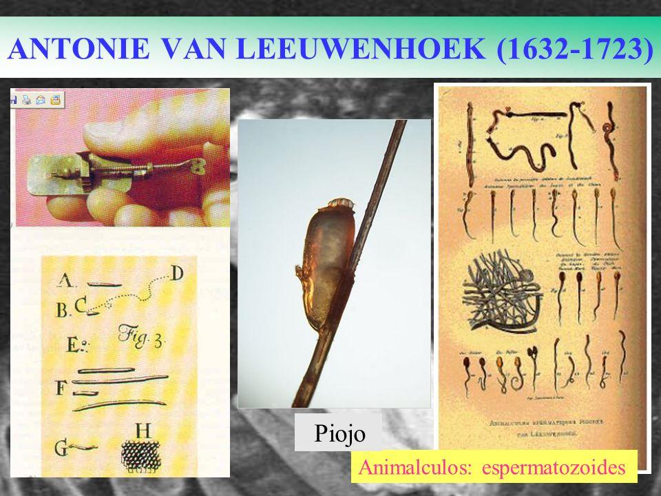ANTONIE VAN LEEUWENHOEK (1632-1723) Animalculos: espermatozoides Piojo