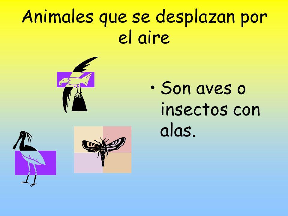 Animales que se desplazan por el aire Son aves o insectos con alas.