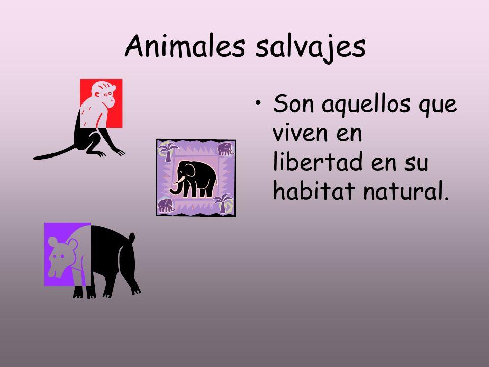 Animales salvajes Son aquellos que viven en libertad en su habitat natural.