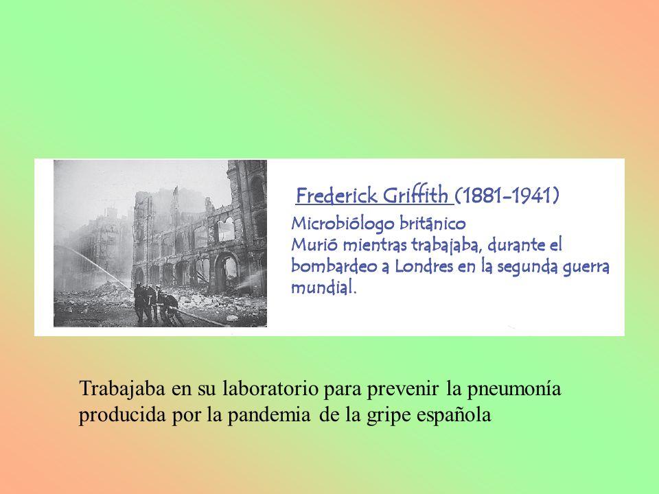TEORÍA CROMOSOMICA DE LA HERENCIA SUTTON Y BOVERI EN 1902 YA LO ADELANTARON 1.- Los genes se localizan en los cromosomas.