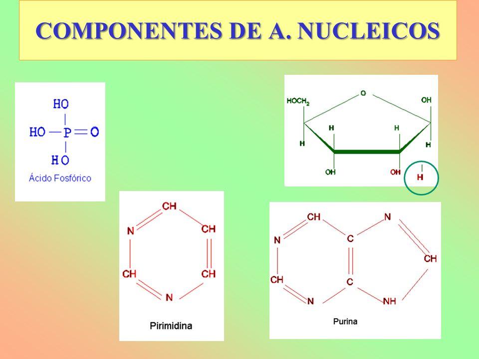 COMPONENTES DE A. NUCLEICOS