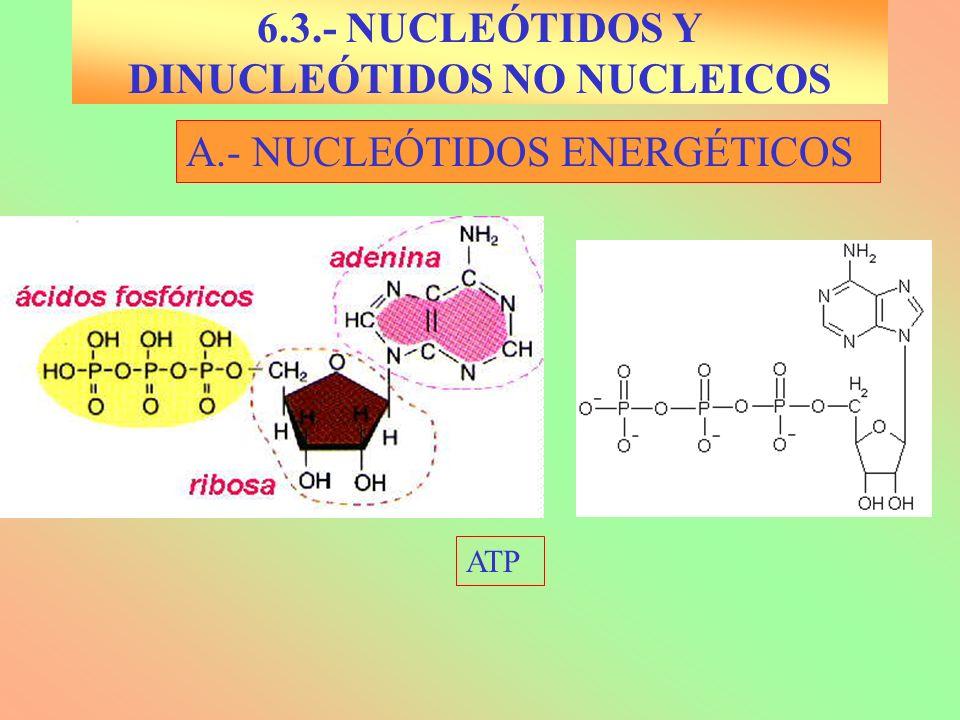 A.-NUCLEÓTIDOS ENERGÉTICOS UTP 6.3.- NUCLEÓTIDOS Y DINUCLEÓTIDOS NO NUCLEICOS