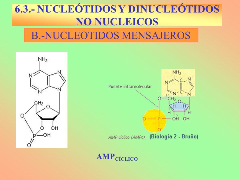 C.- DINUCLEÓTIDOS NO NUCLEICOS B3B3 6.3.- NUCLEÓTIDOS Y DINUCLEÓTIDOS NO NUCLEICOS ATP jmol http://www.biochem.arizona.edu/classes/bioc462/462a/jmol/alpha_b eta/alpha_beta.html