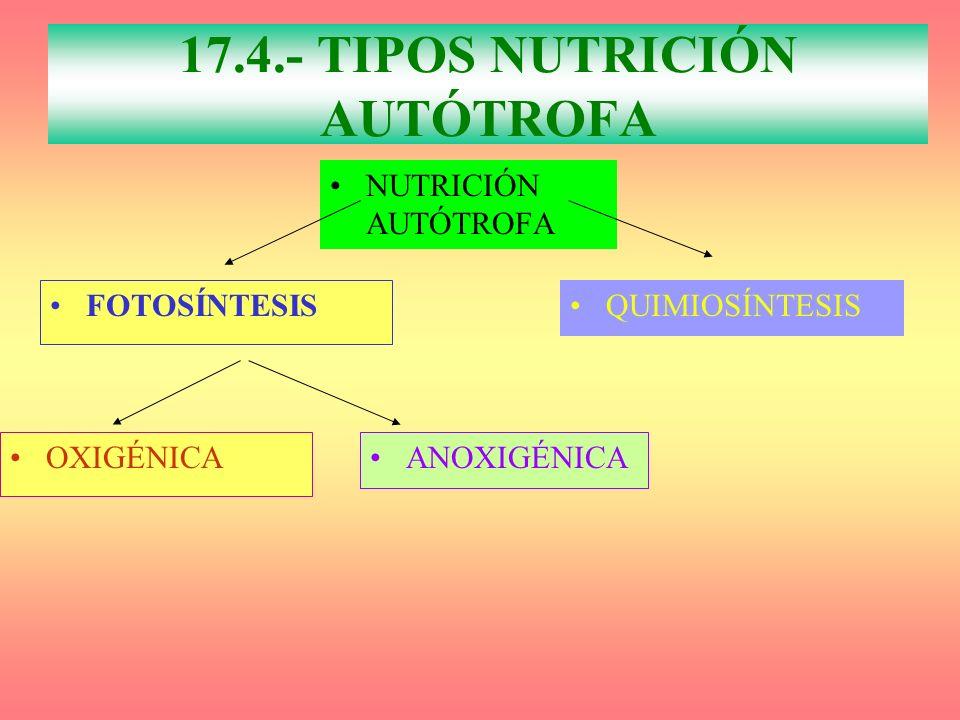 NUTRICIÓN AUTÓTROFA FOTOSÍNTESIS QUIMIOSÍNTESIS OXIGÉNICA 17.4.- TIPOS NUTRICIÓN AUTÓTROFA ANOXIGÉNICA