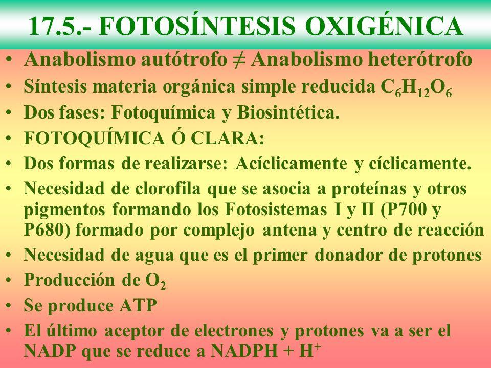 Anabolismo autótrofo Anabolismo heterótrofo Síntesis materia orgánica simple reducida C 6 H 12 O 6 Dos fases: Fotoquímica y Biosintética. FOTOQUÍMICA