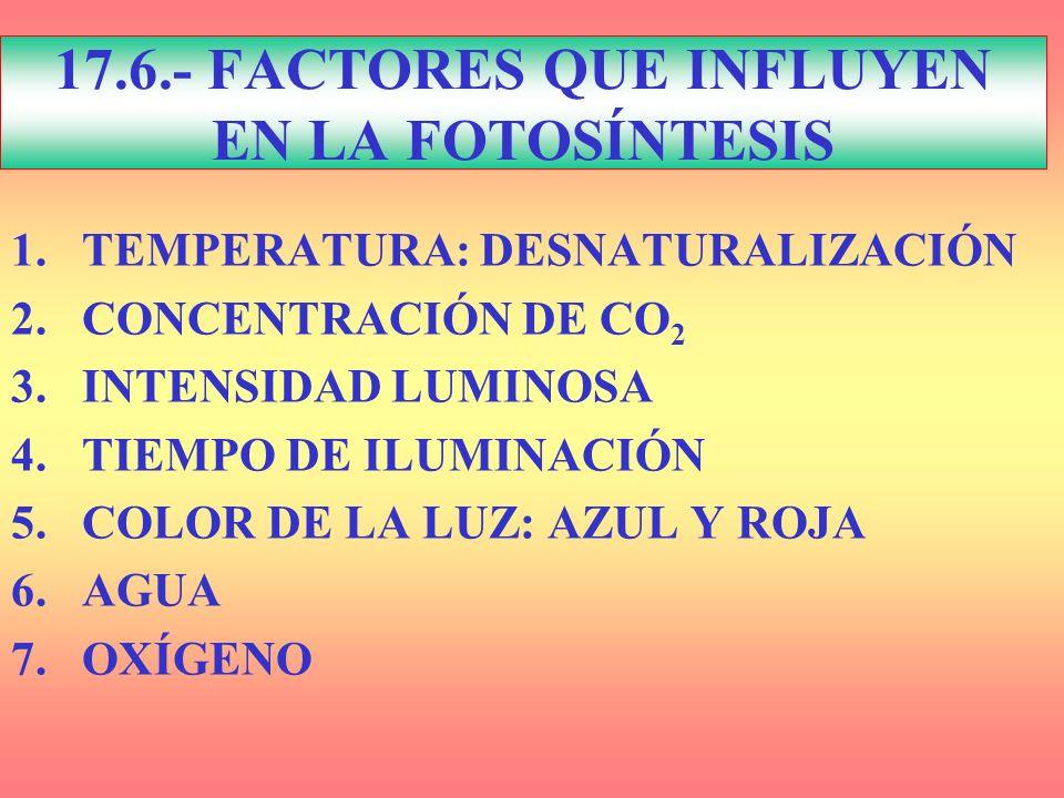 17.6.- FACTORES QUE INFLUYEN EN LA FOTOSÍNTESIS 1.TEMPERATURA: DESNATURALIZACIÓN 2.CONCENTRACIÓN DE CO 2 3.INTENSIDAD LUMINOSA 4.TIEMPO DE ILUMINACIÓN