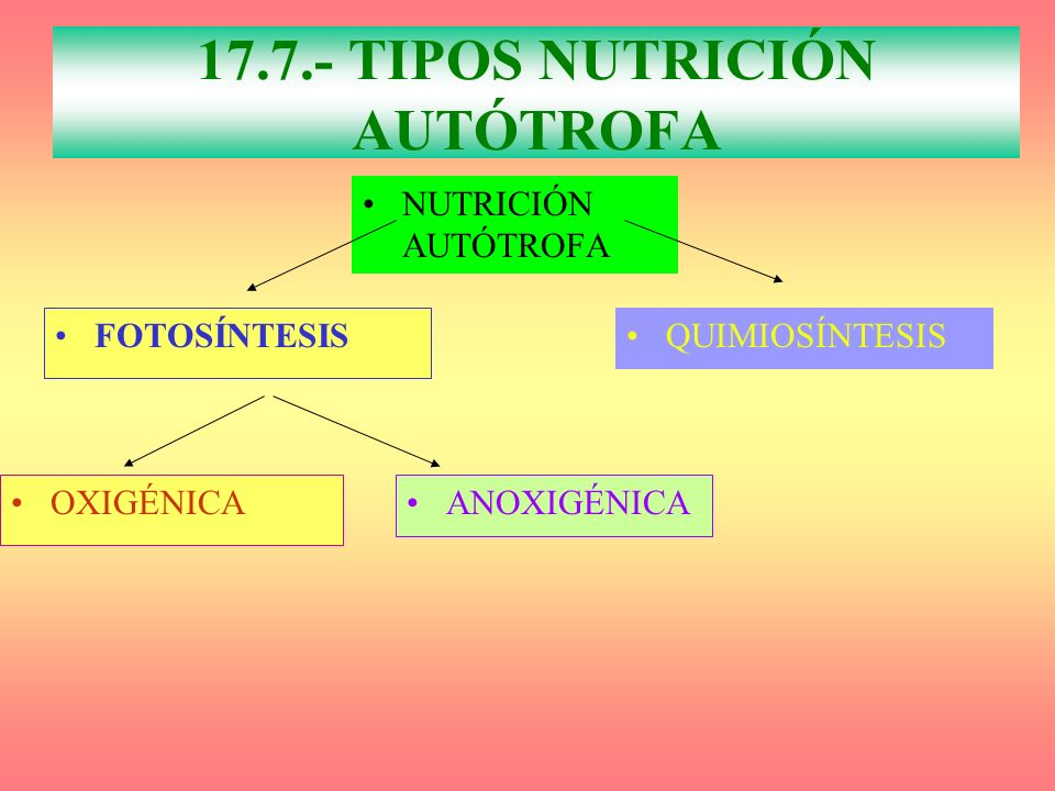 NUTRICIÓN AUTÓTROFA FOTOSÍNTESIS QUIMIOSÍNTESIS OXIGÉNICA 17.7.- TIPOS NUTRICIÓN AUTÓTROFA ANOXIGÉNICA
