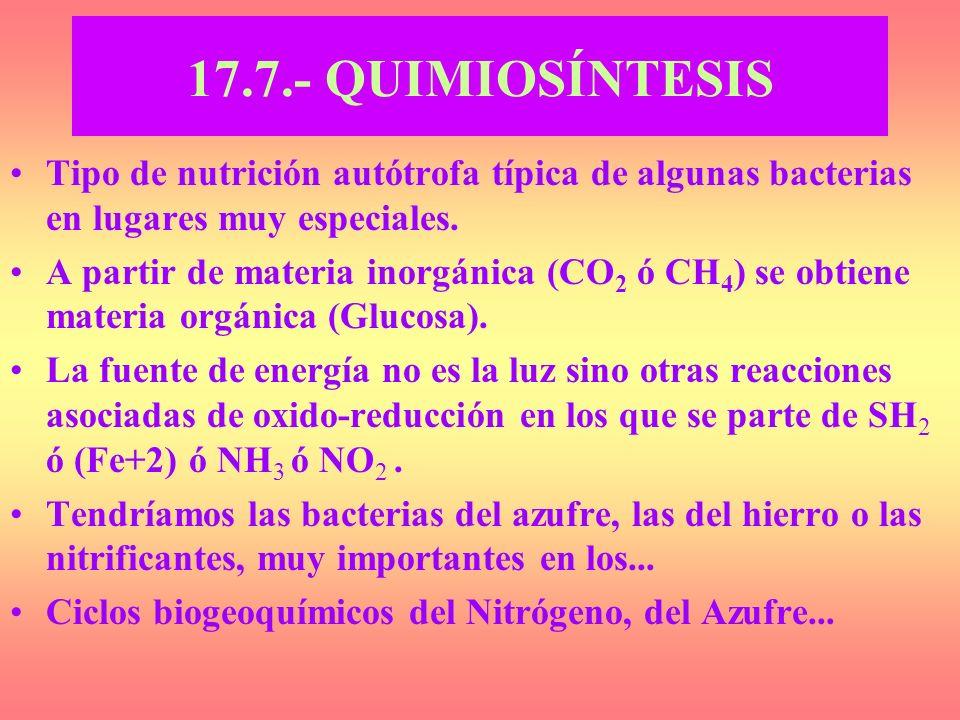 17.7.- QUIMIOSÍNTESIS Tipo de nutrición autótrofa típica de algunas bacterias en lugares muy especiales. A partir de materia inorgánica (CO 2 ó CH 4 )