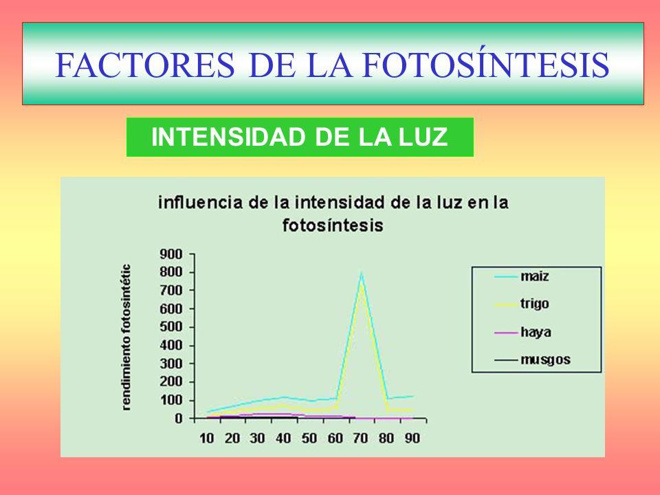 FACTORES REGULADORES DE LA FOTOSÍNTESIS INTENSIDAD DE LA LUZ FACTORES DE LA FOTOSÍNTESIS