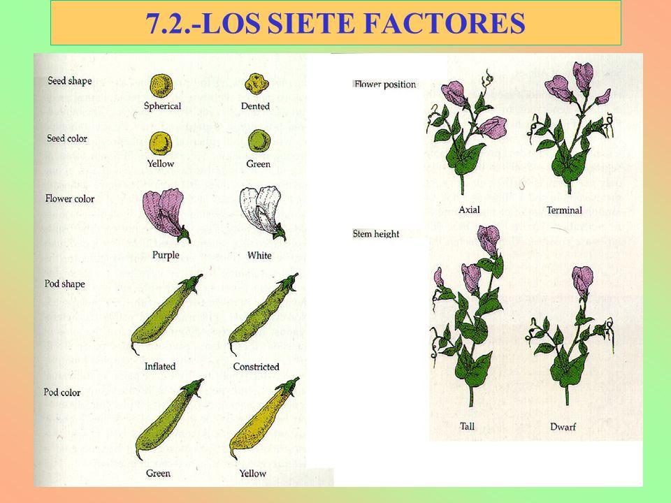 7.2.-LOS SIETE FACTORES