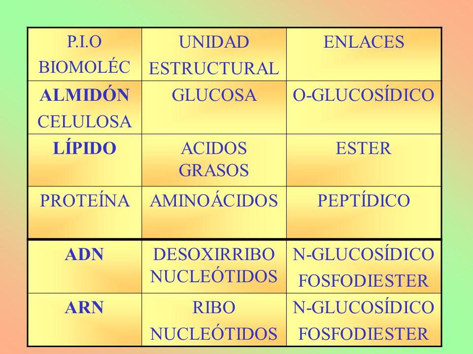 P.I.O BIOMOLÉC UNIDAD ESTRUCTURAL ENLACES ALMIDÓN CELULOSA GLUCOSAO-GLUCOSÍDICO LÍPIDOACIDOS GRASOS ESTER PROTEÍNAAMINOÁCIDOSPEPTÍDICO ADNDESOXIRRIBO