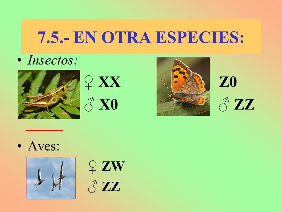 7.5.- EN OTRA ESPECIES: Insectos: XX Z0 X0 ZZ Aves: ZW ZZ