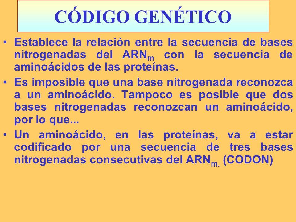 CÓDIGO GENÉTICO Establece la relación entre la secuencia de bases nitrogenadas del ARN m con la secuencia de aminoácidos de las proteínas. Es imposibl