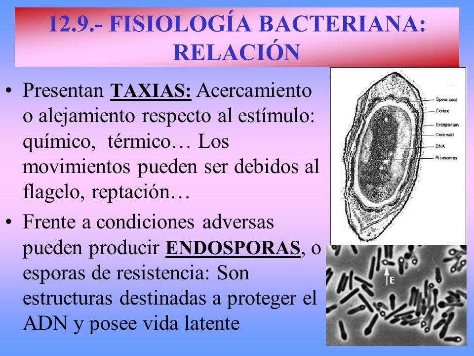 12.9.- FISIOLOGÍA BACTERIANA: RELACIÓN Presentan TAXIAS: Acercamiento o alejamiento respecto al estímulo: químico, térmico… Los movimientos pueden ser