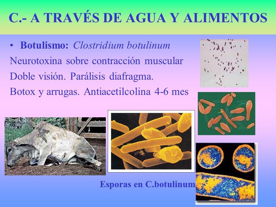 Botulismo: Clostridium botulinum Neurotoxina sobre contracción muscular Doble visión. Parálisis diafragma. Botox y arrugas. Antiacetilcolina 4-6 mes C