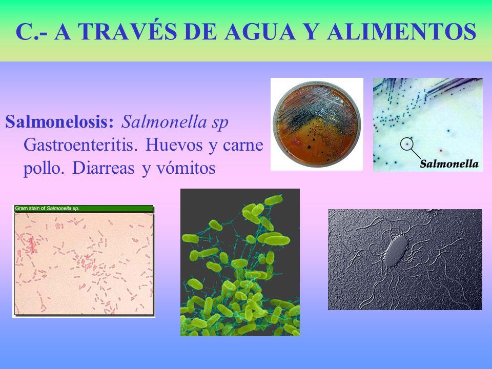 Salmonelosis: Salmonella sp Gastroenteritis. Huevos y carne pollo. Diarreas y vómitos C.- A TRAVÉS DE AGUA Y ALIMENTOS